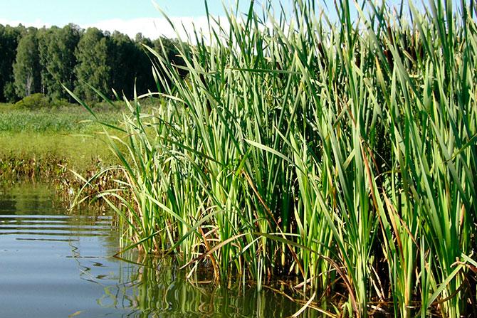 Место ловли уклейки на озере