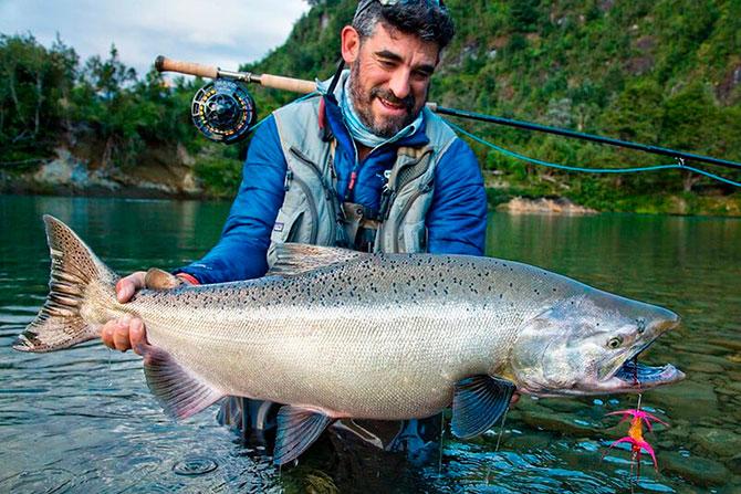 Возраст и размеры рыбы чавыча
