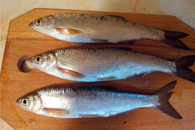 Рыба Шамайка - питательная ценность