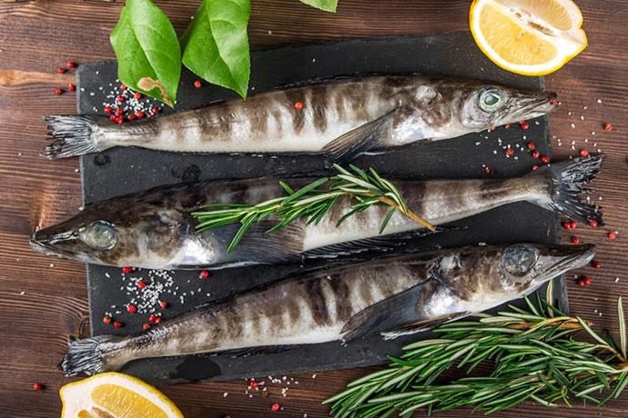 Ледяная рыба (щуковидная белокровка) - питательная ценность