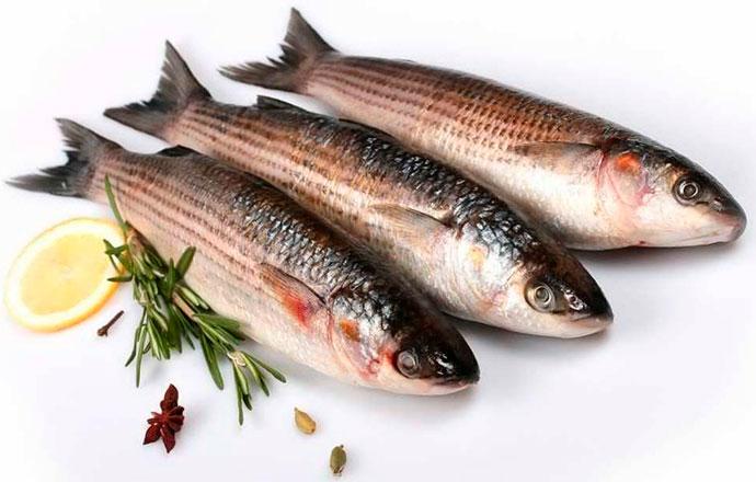 Рыба Лобан или Черная Кефаль - питательная ценность